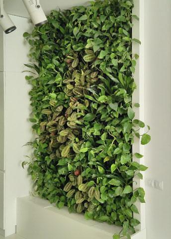 Использование фитостены для создания эко-атмосферы в квартире, г. Киев