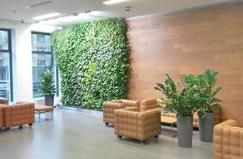 Система вертикального озеленения со скрытым баком в офисе киевской компании