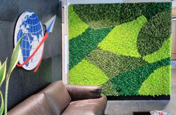Зеленая стена с использованием нескольких цветов стабилизированного мха в приемной киевской компании