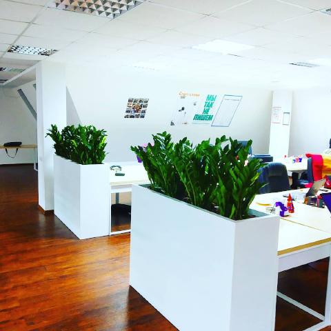 Кашпо с растениями в офисе, г. Днепр